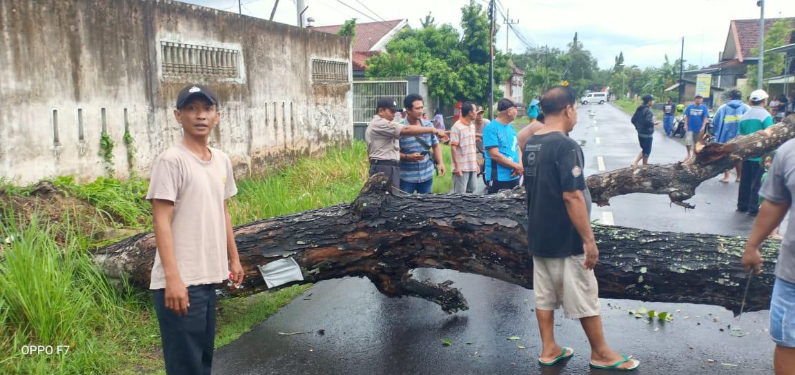 Pengendara Motor Tabrak Pohon Tumbang Disaat Hujan Angin